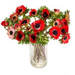 Anemones (anemone)