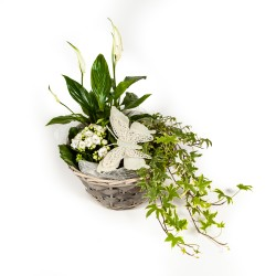 Flower arrangement  - ivy,...